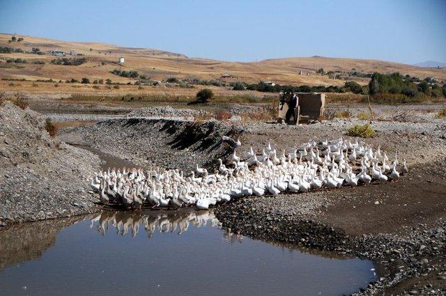 Tunceli'de Peri Çayı kenarında kaz çiftliği kurdu