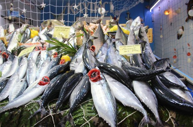 balık fiyatları, palamut ne kadar