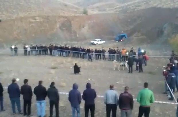 Konya'da bahisle köpek dövüşüne jandarma baskını