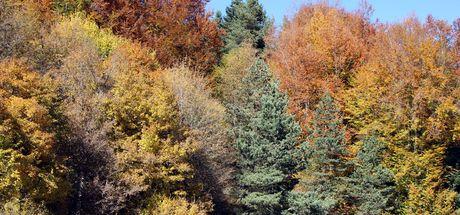 Abant Tabiat Parkı'nda sonbahar yoğunluğu
