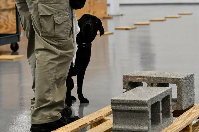 CIA, Lulu köpeği işten çıkardı
