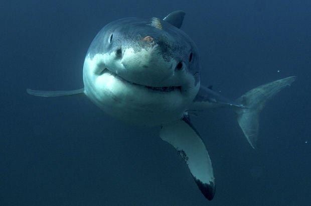 Köpekbalığından 3 saat yüzerek kurtuldu