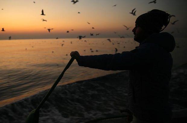 balık, balık fiyatları, hamsi, istavrit