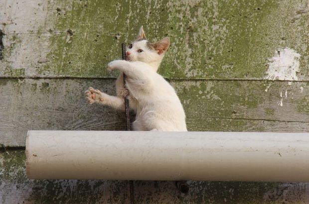 Kocaeli'de çatıdan düşen kedi inşaat demirine saplandı