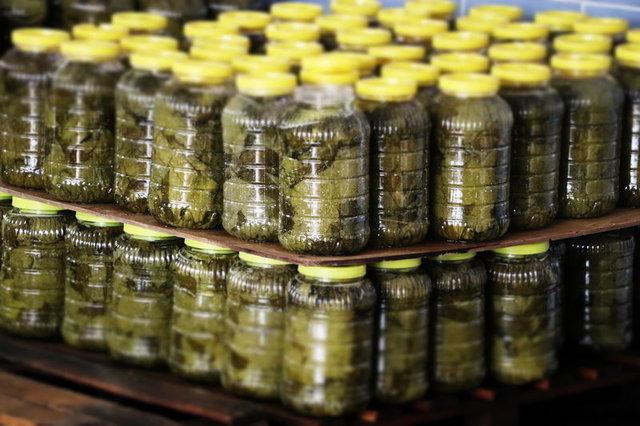 Manisa'nın salamura yaprağı İngiliz sofralarında