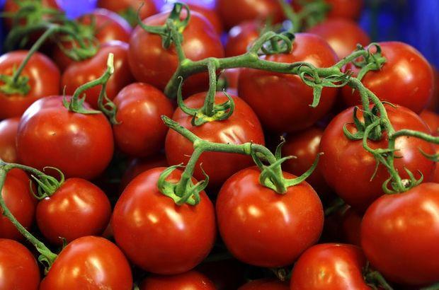 rusya domates yasağı, rusya türkiye