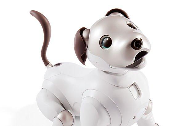 Yapay zekalı robot köpek yavruları yuva arıyor