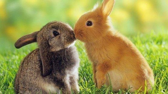 'Tavşanlar gibi sevişin'