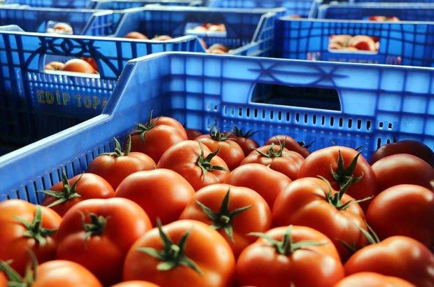 rusya domates, rusya domates ihracatı