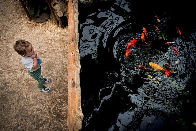 En güzel 'Doğal Yaşam' fotoğrafları açıklandı
