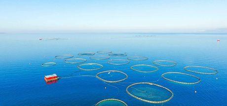 Türk kültür balıkçılığı ihracatı 800 milyon doları aştı