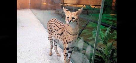 AVM'de vahşi hayvan sergisine tepki