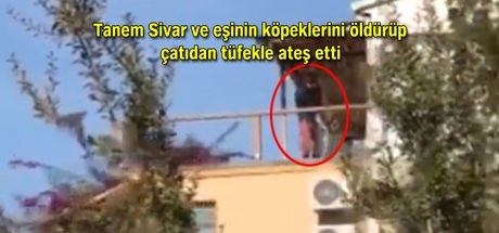 Tanem Sivar'ın köpeklerini öldürmekle suçlanan komşusu tutuklandı