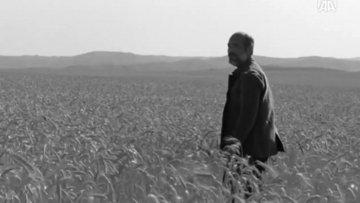 """""""Buğday""""ın galası Beştepe'de yapılacak"""