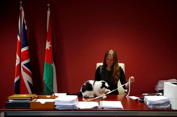 İngiltere'den Ürdün'e diplomat kedi!