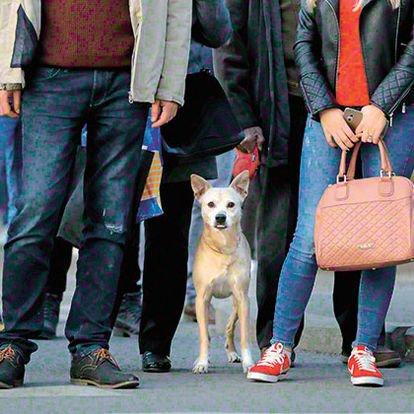 Köpekler he ryere alınmalı mı?