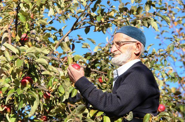 """""""Misket elması""""nın kaybolmaması için fidanlarını ücretsiz dağıtıyor"""