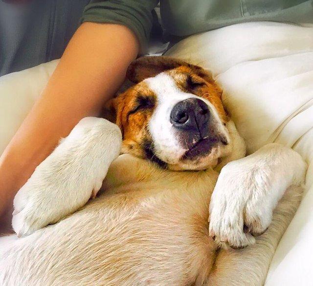 Sahibinin gözünden kediyle köpek dostluğu