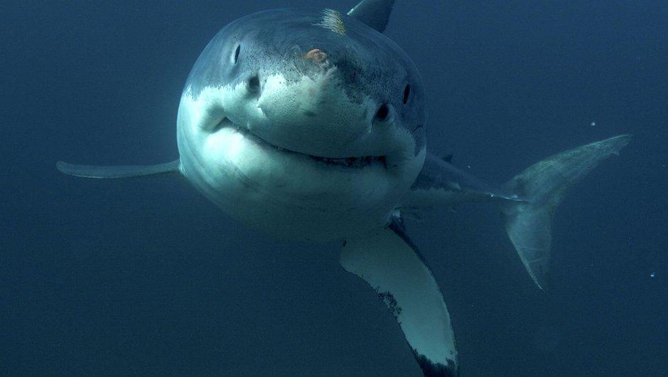 ABD köpekbalığı