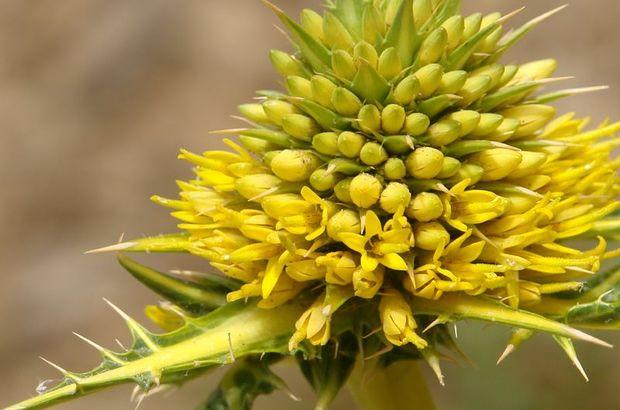 Dört yeni bitki türü keşfedildi