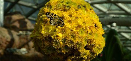 Doğal yaşam alanındaki kelebekler stresten uzaklaştırıyor