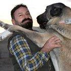 Kangal köpekleri İngiltere'nin gündeminde