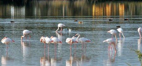 İzmir'in Gediz Deltası için UNESCO Dünya Doğa Mirası talebi