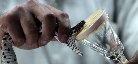 Kobra zehiri nedir? Kobra zehiri ne işe yarar?