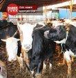Geçtiğimiz ay ucuz et konusu ile gündeme gelen ithal et konusunda en son rakamlar açıklandı. Türkiye