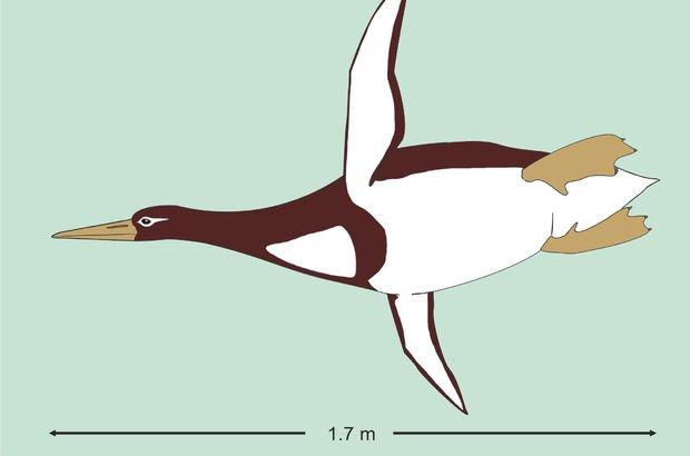 İnsan boyutunda penguen fosili bulundu!