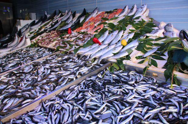 palamut hamsi çipura  zargana Balık fiyatları