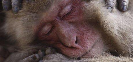 National Geographic'in gözünden en iyi doğa fotoğrafları