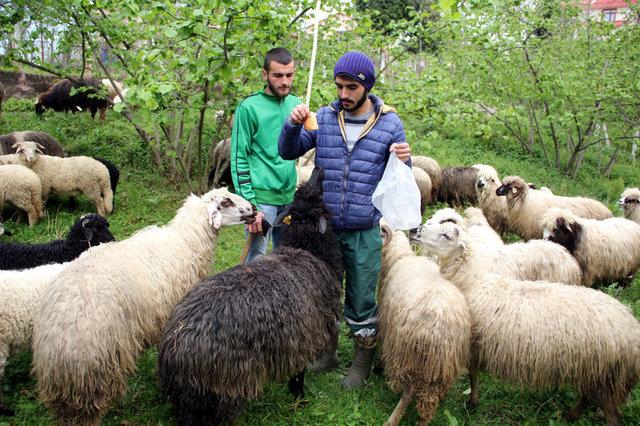 Genç çiftçiler hayallerine devlet desteğiyle kavuşuyor