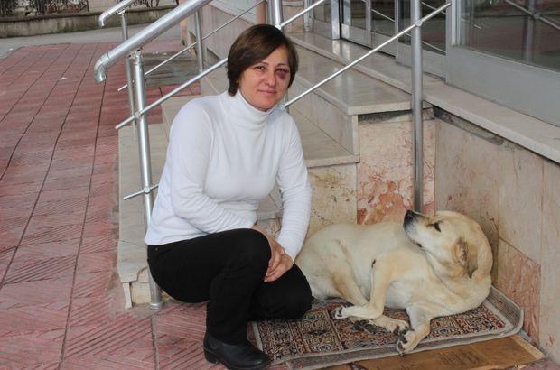 Manisa'da bir kişi sokak hayvanlarını beslediği için darp edildi