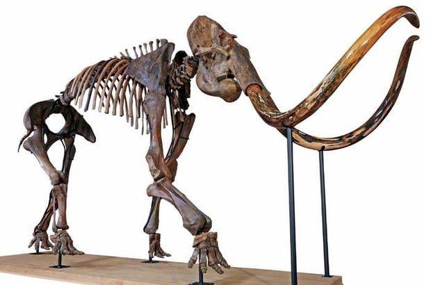 Mamut iskeletine 646 bin dolar