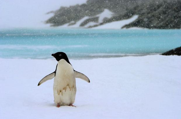 Penguenlerin geçmişi 14 bin 600 yıl öncesine dayanıyor!