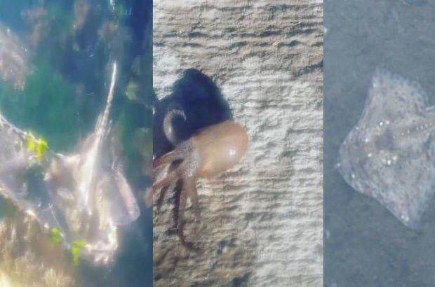 Maltepe sahilinde şaşkınlık yaratan olay! Onlarcası kıyıya vurdu
