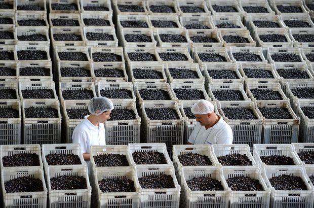 Marmarabirlik TSK'ya 44 milyon liralık zeytin verecek