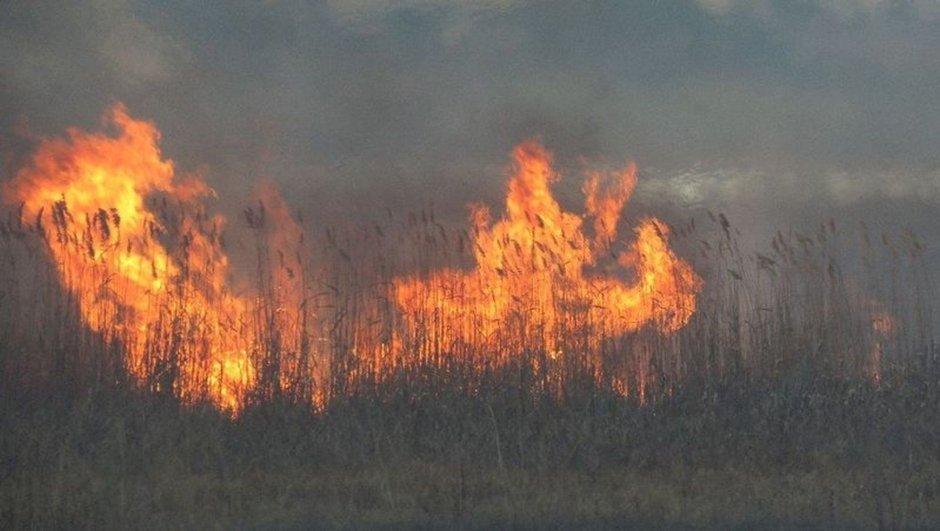 Beyşehir Gölü sazlığında yangın