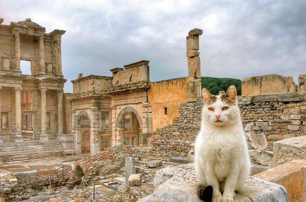 Efes Antik Kentini Bu Yıl Kaç Turist Ziyaret Etti Son Dakika
