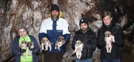 800 yıllık çınarın kovuğu 8 yavru köpeğe barınak oldu