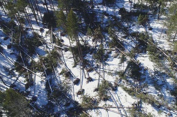 Yer: Bolu... Yüzlerce ağacı kökünden söktü!
