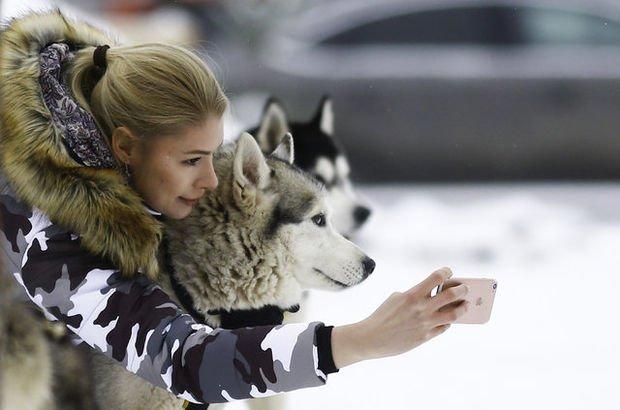 Huskyler Sibirya'yı Moskova'ya taşıyor