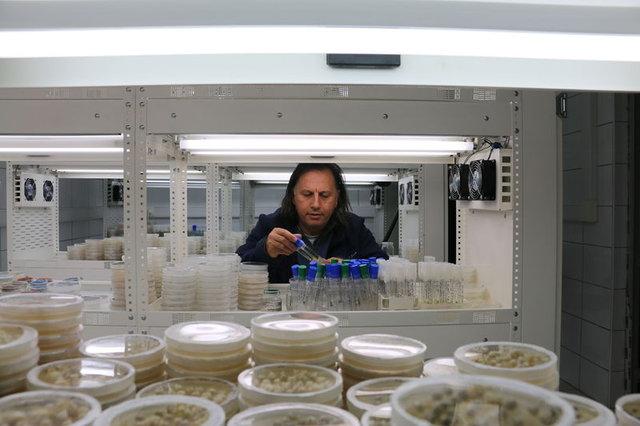 Yeni nesil hibrit soğan üretildi