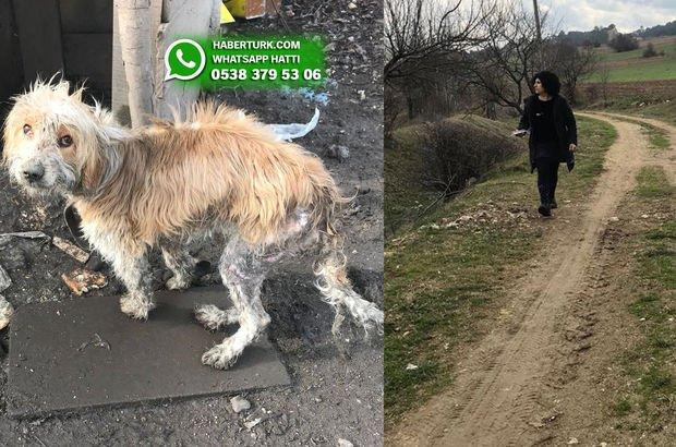 Zincirlenerek ölüme terk edilen köpek kayboldu!