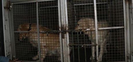 Adana'da köpeğe şiddete polisten gözaltı