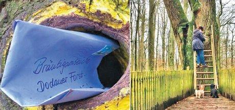 Almanya'da yüzlerce çift bu ağaca mektuplar bırakarak tanışıp evlendi