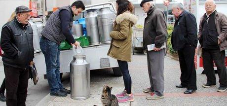 4 yıldır süt almak için sıraya giren sevimli kedi!