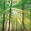 Peter Wohlleben: Ağaçlar elbette acı çekiyor