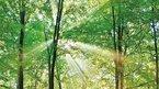 Yeşil bilmece: Sevip konuşuyor ama insan değil